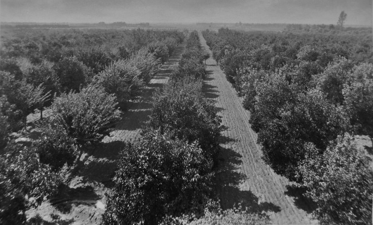 orchard-in-south-la
