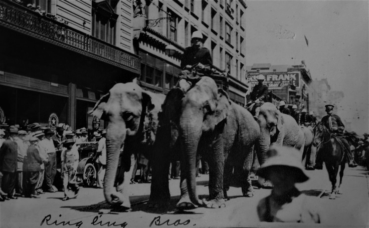 ringling-brothers-elephants-1914