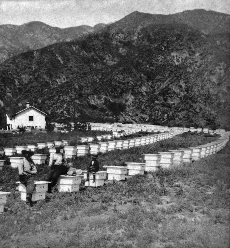 SV No 163 An Apiary On The Foothills Of San Gabriel 2010.438.1.1