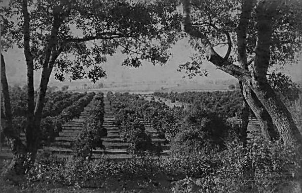 winston orchard sg 201215111