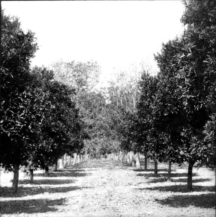 SV Stoneman Orchard San Gabriel 2008.260.1.1