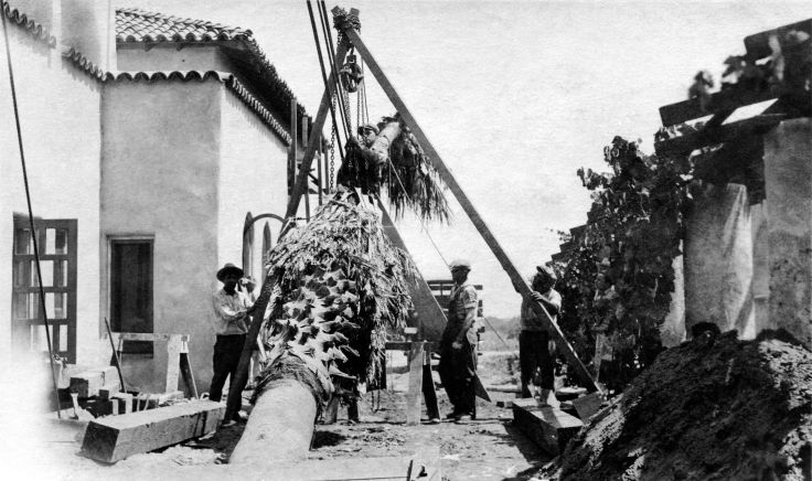 Frank Romero And Three Others Plant Palm Tree East Side Of La Ca