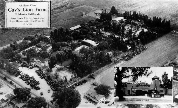 0817096RPPC Airplane View Gays Lion Farm El Monte California 2012.730.1.1